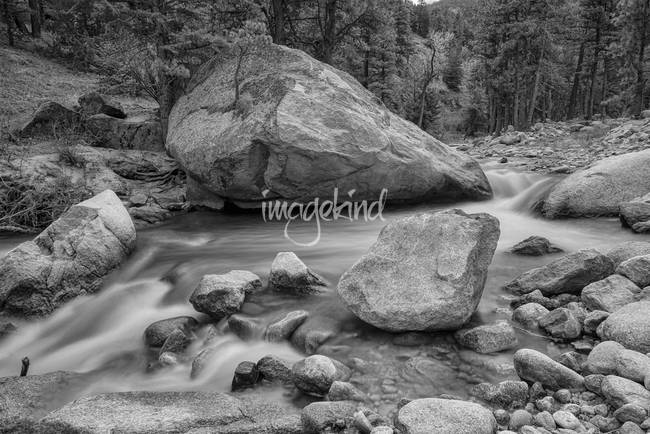 Soothing Colorado Monochrome Wilderness