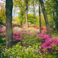 """The Azalea Woodland"" by JessicaJenney"