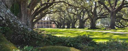 Oak Alley Plantation panoramic style