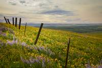 Fence Line Wildflowers