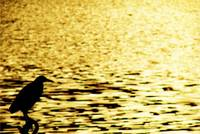 Wading in GOLD!!!, Udaipur