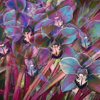 Cymbidium Orchid Carnival Art Prints & Posters by Sheryl Karas
