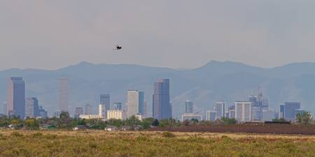 Denver Colorado Pretty Bird Fly By