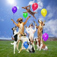 Dogs Celebrate in a Grassy Field