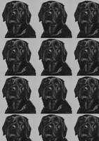 Black Labrador repeat
