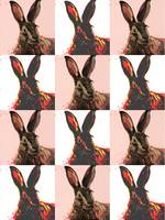 hare wallpaper