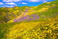 Happy Days Are Here Again - Superbloom 2017