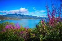 Spring Beauty at Lake Shasta