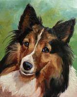 Kaylee Border Collie