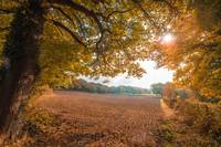 Sunrise Over Autumn Harvest Fielt With Fall Trees