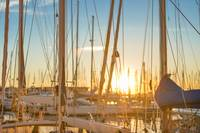 Yacht Masts In European Marina At Sunrise