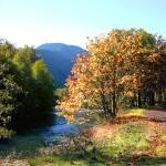 Mountain Stream, Oregon