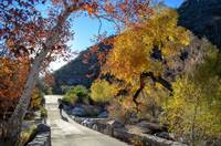 M4 Bridge And Fall Colors At Sabino Canyon