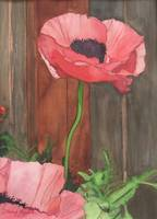 Poppy_Standing_Tall_ II