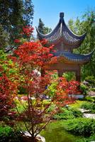 Red Maple and Pagoda in the Chinese Garden