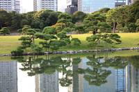 Tokyo Trees Reflection