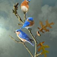 Nothing But Bluebirds by I.M. Spadecaller