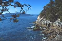In Lighthouse Park, West Vancouver, BC, Canada by Priscilla Turner