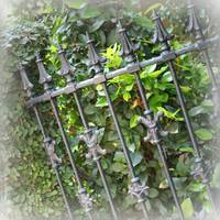 Southern Charm Fence by Carol Groenen