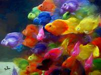 school of colorful fish