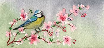 Beautiful Blue Tit Bird On Cherry Blossom Tree
