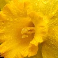 Spring Showers by Karen Adams