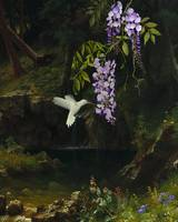 The White Hummingbird