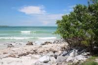 Florida Shelling Beach by Carol Groenen