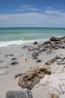 Rocky Florida Beach with Shells by Carol Groenen