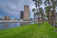 Downtown Tampa and Rows of Palms