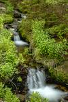 """Green Refreshing Wilderness by James """"BO"""" Insogna"""