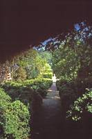 Dumbarton Oaks, Washington, DC 37 by Priscilla Turner