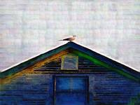 SEAGULL ON ROOF IN ROCKPORT MAINE