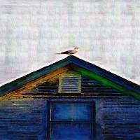"""SEAGULL ON ROOF IN ROCKPORT MAINE"" by TedLarsen"