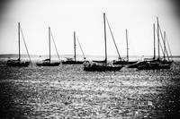 boats in mono