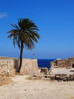Cyprian Palm Tree at Kyrenia Castle, Cyprus