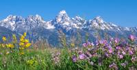Teton Wildflowers Panorama by David Kocherhans