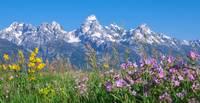 Teton Wildflowers Panorama by David Kocherhans