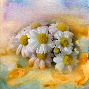 White flowers watercolour digital painting by barbara dudzinska mightylinksfo