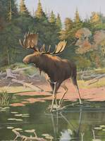 Vintage Moose Illustration (1902)