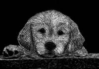 scratchboard retriever