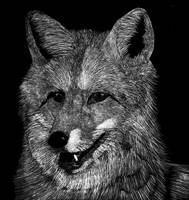 Scratchboard Fox Portrait