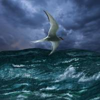 Voyage of the Arctic Tern by I.M. Spadecaller