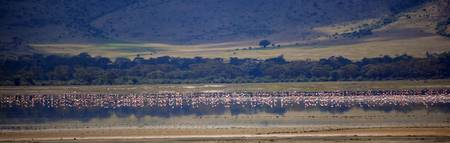 flamingos in Ngorogoro Crater