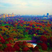 new york city central park south Art Prints & Posters by Tom Jelen