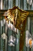 HANGING BROWN LEAF STILL LIFE, 25JULY17, EDIT B