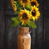 Sunflowers in Copper Milk Can by I.M. Spadecaller