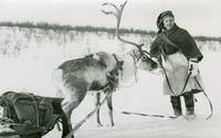 Elisabeth  Meyer, A man holds a reindeer with a sl
