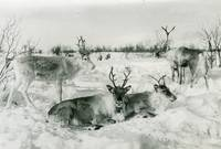 Elisabeth  Meyer, Close-up of three reindeer on a