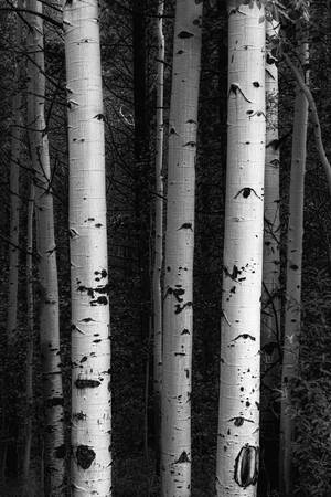 Monochrome Wilderness Wonders